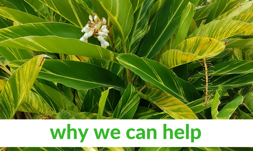 Green plant with text Why We Can Help for fitness, nutrition, and health coaching in Brisbane