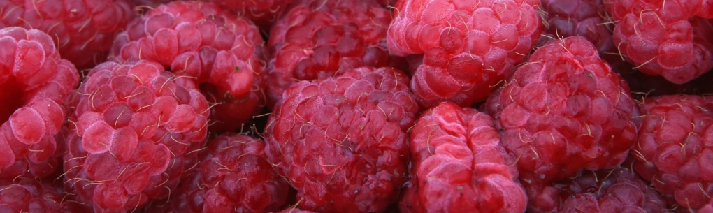 Fresh red raspberry for a fast, easy healthy snack or breakfast