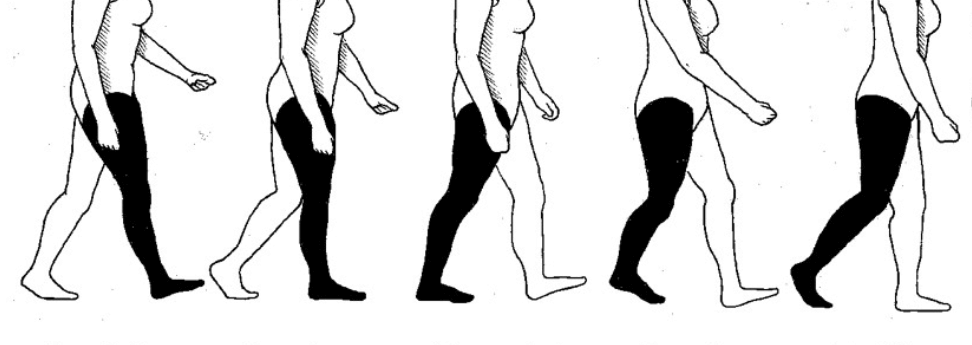 Human gait walking pattern